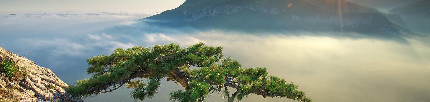Baum-am-Hang-von-Berg